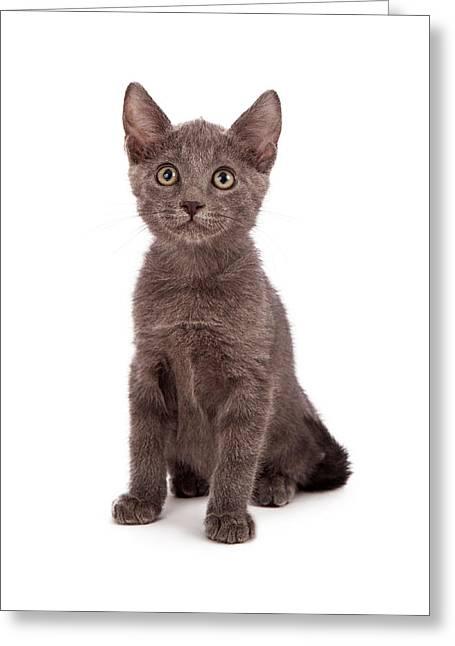 Cute Kitten Photographs Greeting Cards - Gray little kitten  Greeting Card by Susan  Schmitz