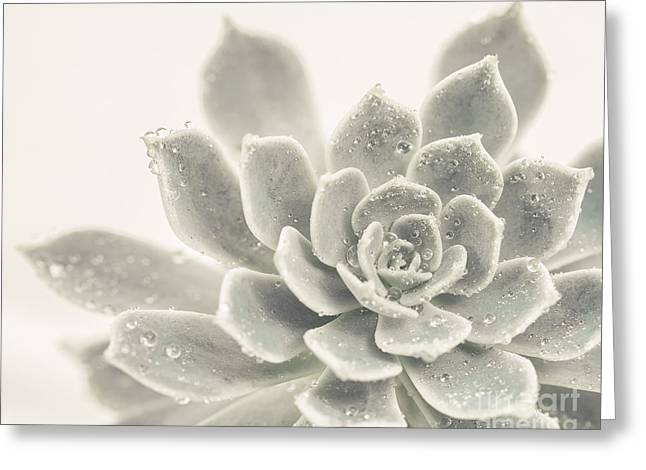 Succulent Greeting Cards - Gray Succulent 2 Greeting Card by Lucid Mood