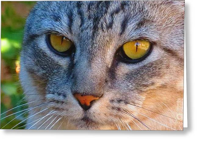 Warm Summer Pyrography Greeting Cards - Gray tabby cat eyes. Greeting Card by Cindy Daly