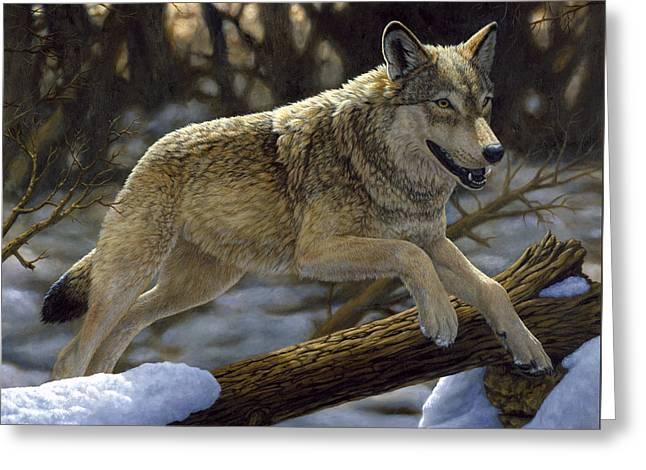 Grey Wolf Greeting Cards - Gray Wolf - Just for Fun Greeting Card by Crista Forest