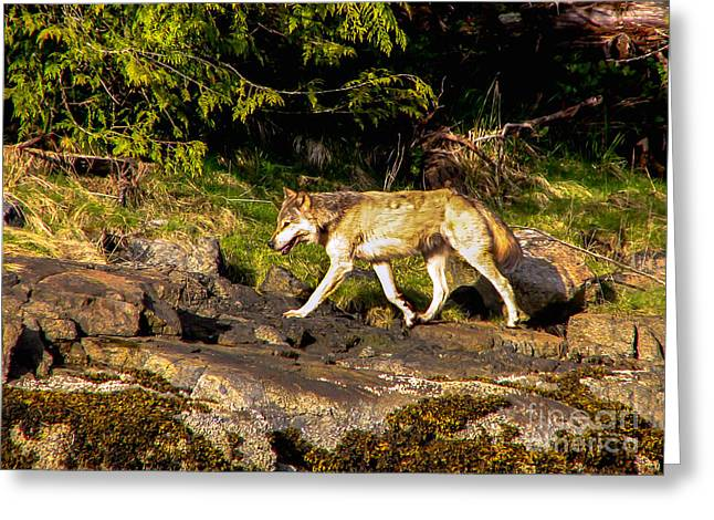 Growl Photographs Greeting Cards - Gray Wolf Greeting Card by Robert Bales