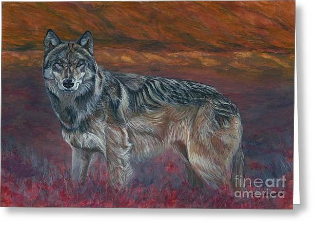 Gray Wolf Greeting Card by Tom Blodgett Jr