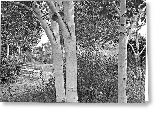 Woodland Scenes Greeting Cards - Grayswood Ghost - Himalayan Birch Black and White Greeting Card by Gill Billington