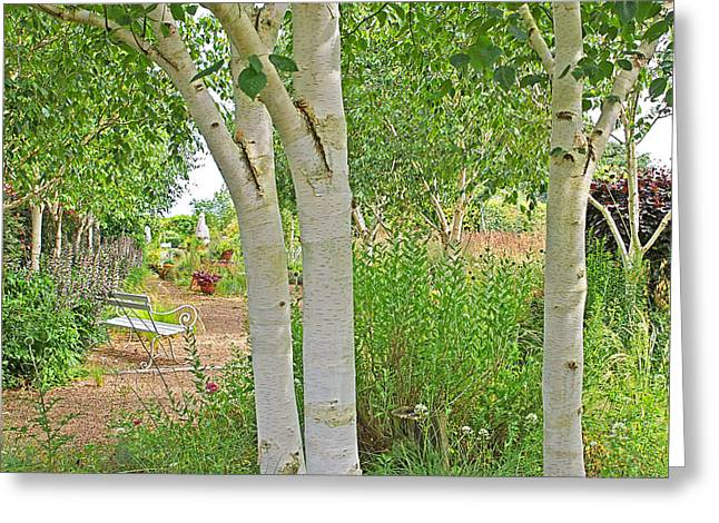 Woodland Scenes Greeting Cards - Grayswood Ghost - Himalayan Birch Greeting Card by Gill Billington