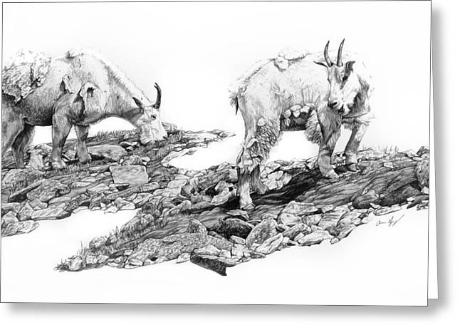 Goat Drawings Greeting Cards - Grazing Greeting Card by Aaron Spong