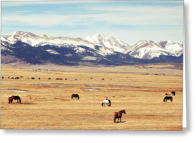 Grazing Snow Greeting Cards - Grazing Greeting Card by Amelia Kay Photography