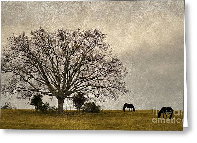 Harts Digital Greeting Cards - Grazing - D003782-a Greeting Card by Daniel Dempster