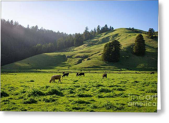 Grazing Hillside Greeting Card by CML Brown