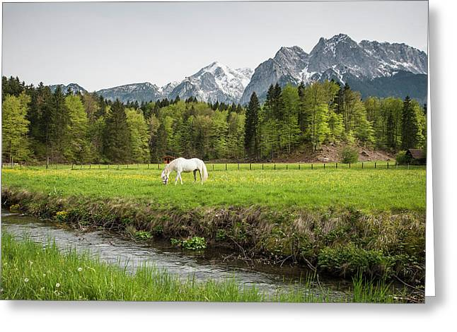 Grazing Horse In Pasture In Bavarian Greeting Card by Sheila Haddad