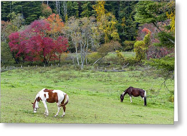 Equestrian Prints Greeting Cards - Grazing Horses Autumn Pasture along The Blue Ridge Parkway NC Greeting Card by Terry DeLuco