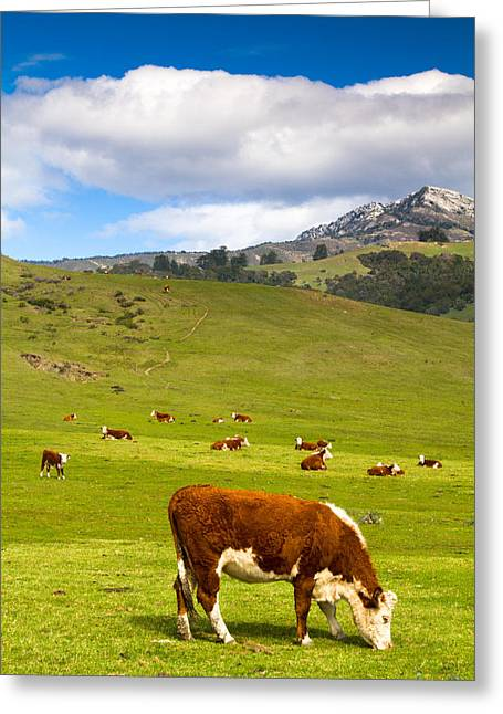 Big Sur California Greeting Cards - Grazing in Big Sur Greeting Card by TB Sojka