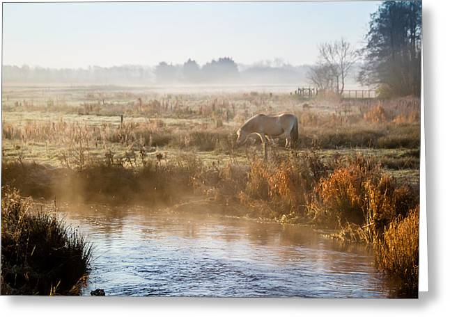 Odd Jeppesen Greeting Cards - Grazing In The Mist Greeting Card by Odd Jeppesen