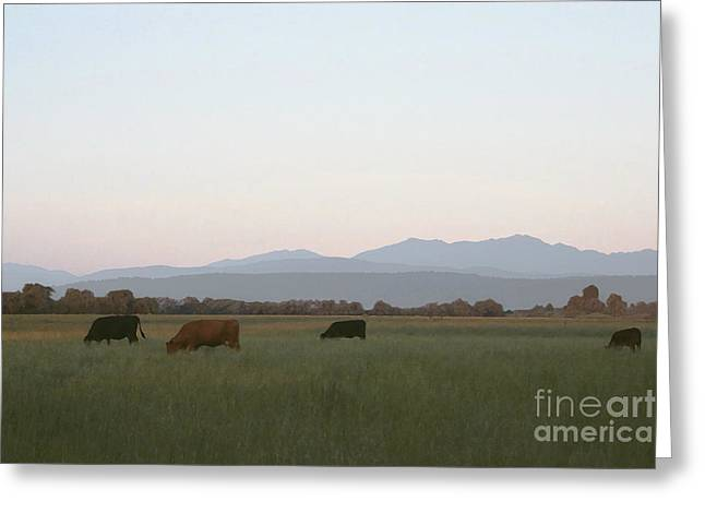 Subtle Colors Greeting Cards - Grazing In The Rain Shadow Greeting Card by Susan Parish