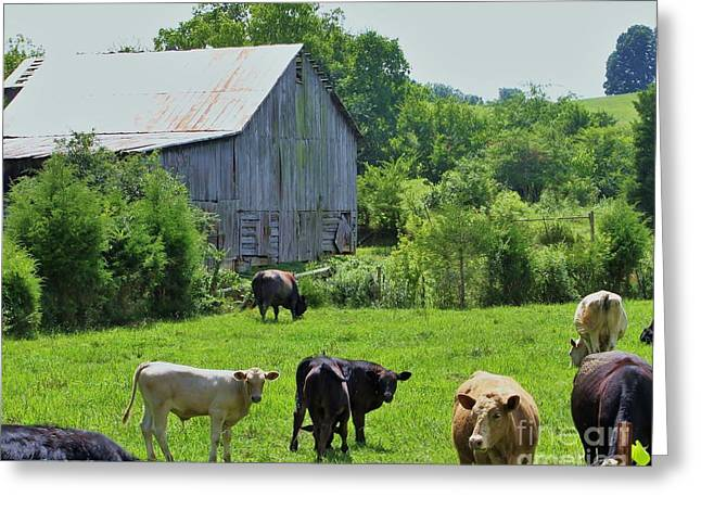 Fed Greeting Cards - Grazing Near The Barn Greeting Card by Chuck  Hicks