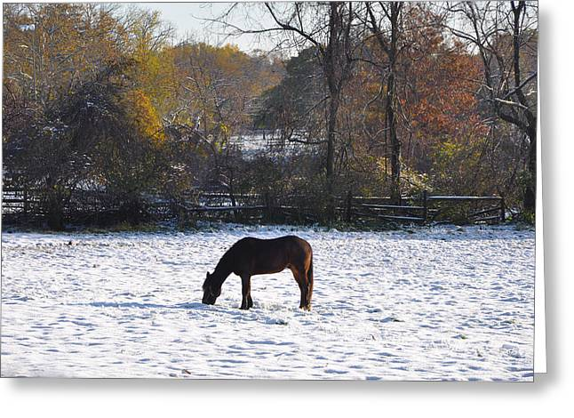 Snowy Day Digital Greeting Cards - Grazing on a Snowy Day Greeting Card by Bill Cannon