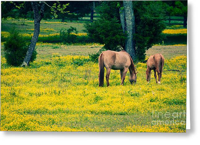Pasture Framed Prints Greeting Cards - Grazing on Sunshine - Horses in a Pasture I Greeting Card by Dan Carmichael