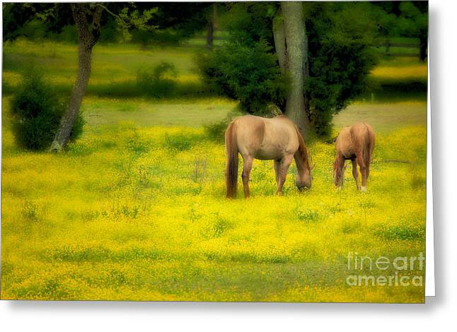 Paint Photograph Greeting Cards - Grazing on Sunshine - Horses in a Pasture II Greeting Card by Dan Carmichael