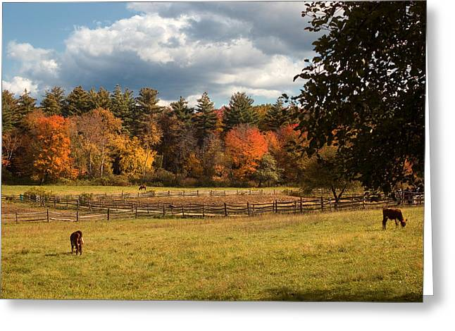 New England Village Scene Greeting Cards - Grazing on the Farm Greeting Card by Joann Vitali