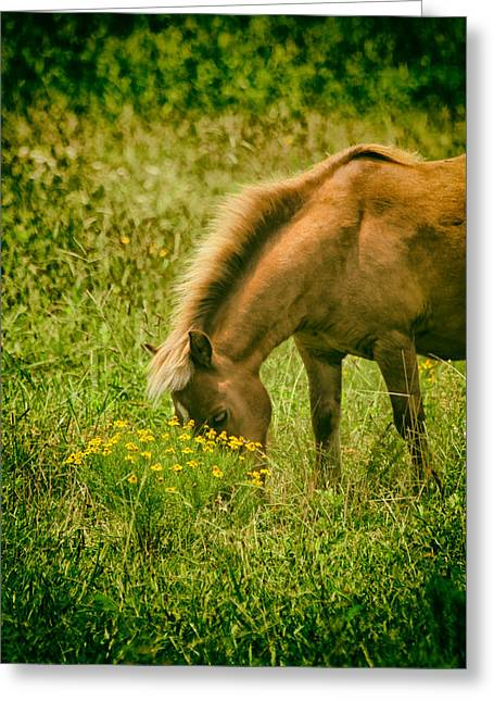 The Ranch Greeting Cards - Grazing Pony Greeting Card by Karol  Livote