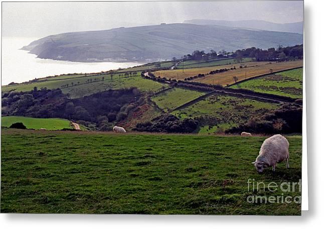 Grazing Sheep County Antrim Northern Ireland Greeting Card by Thomas R Fletcher
