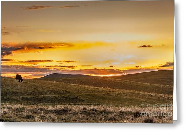 Haybale Greeting Cards - Grazing Sunset Greeting Card by Robert Bales