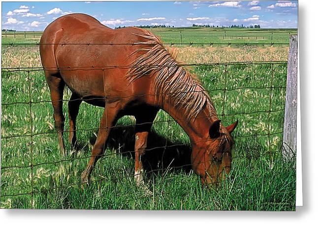 Pastoral Greeting Cards - Grazing Greeting Card by Terry Reynoldson