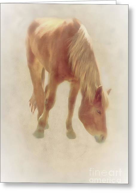 Equestrian Prints Photographs Greeting Cards - Grazing Time Greeting Card by Tom York Images