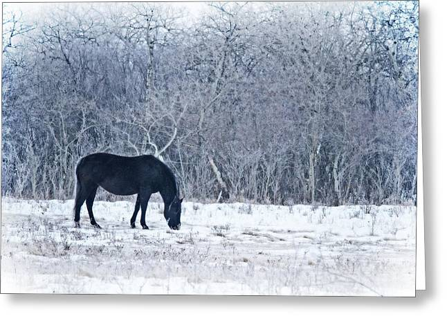 Grazing Snow Greeting Cards - Grazing Greeting Card by Tracy F