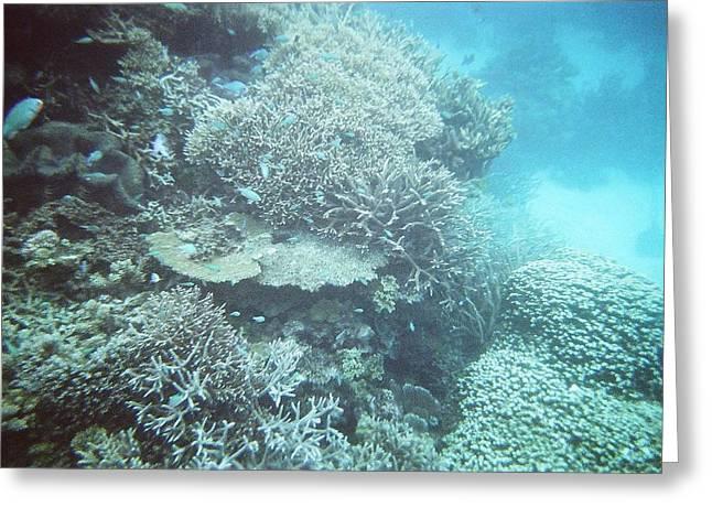 Snorkel Greeting Cards - Great Barrier Reef Greeting Card by Jill Baum