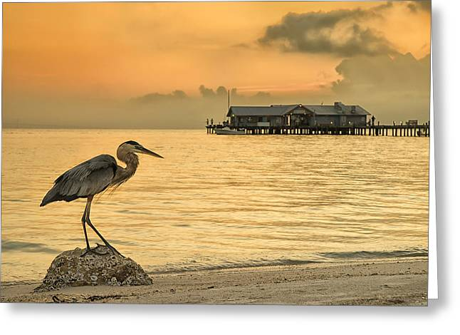 City Pier Greeting Cards - Great Beauty Greeting Card by Darylann Leonard Photography