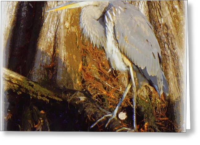 Great Blue Heron Framed Print Greeting Cards - Great Blue 1 Greeting Card by Sheri McLeroy