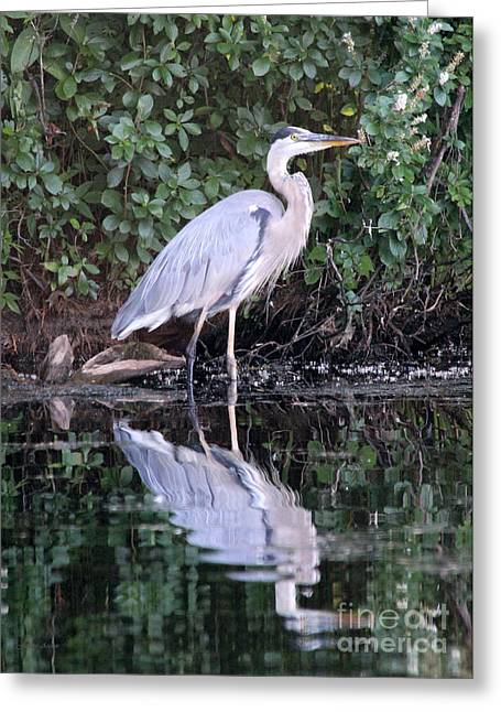 Grafton Ma Greeting Cards - Great Blue Heron 1 Greeting Card by Jemmy Archer