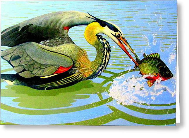 Great Blue Heron Framed Print Greeting Cards - Great Blue Heron and Sunfish Greeting Card by Buzz Coe