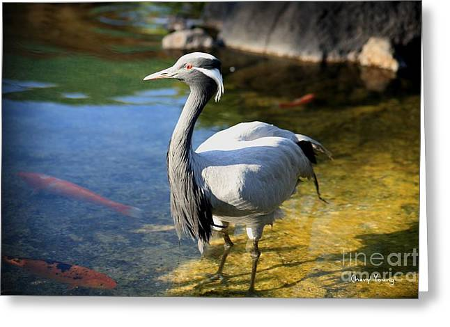 Hawaiian Pond Greeting Cards - Great Blue Heron Greeting Card by Cheryl Young