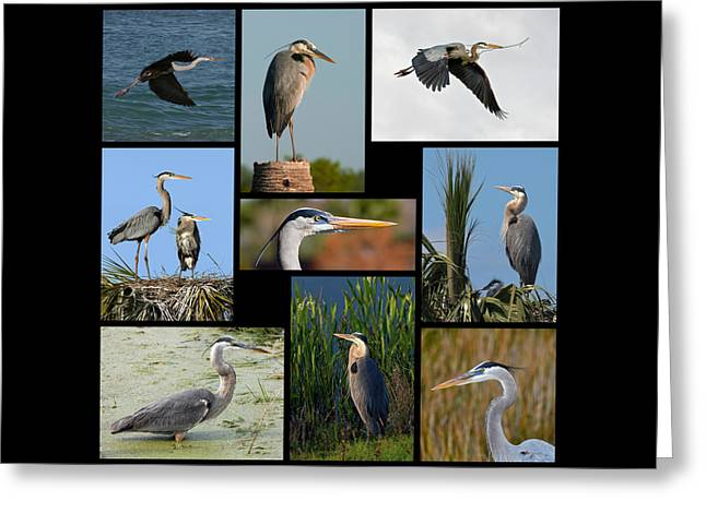 Wildlife Refuge. Greeting Cards - Great Blue Heron Collage Greeting Card by Dawn Currie