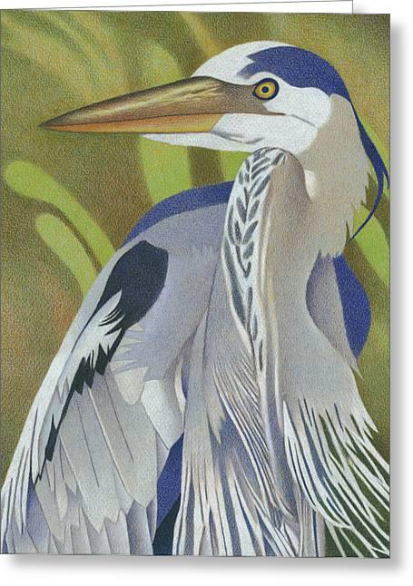 Willow Lake Drawings Greeting Cards - Great Blue Heron Greeting Card by Dan Miller