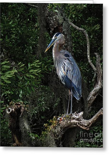 Great Blue Heron  Greeting Card by Deborah Smith