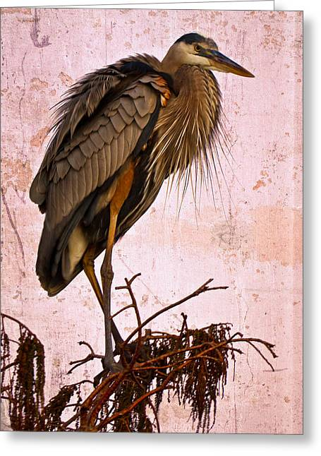 Cay Greeting Cards - Great Blue Heron Greeting Card by Debra and Dave Vanderlaan