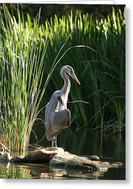 Heron Greeting Cards - Great Blue Heron Greeting Card by Ellen Henneke