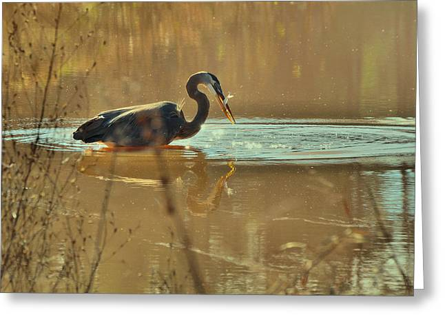 Crane Greeting Cards - Great Blue Heron fishing -3268c Greeting Card by Paul Lyndon Phillips