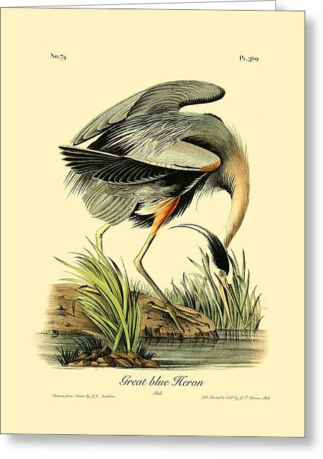 Antique Digital Art Greeting Cards - Great Blue Heron Greeting Card by Gary Grayson