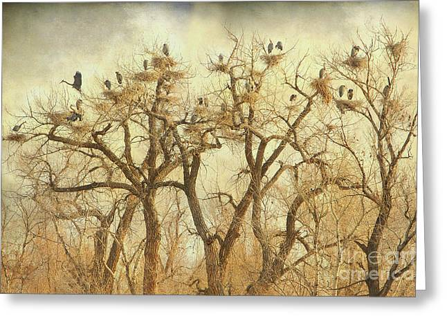 Wildlife Art Acrylic Prints Greeting Cards - Great Blue Heron Hangout Fine Art Greeting Card by James BO  Insogna