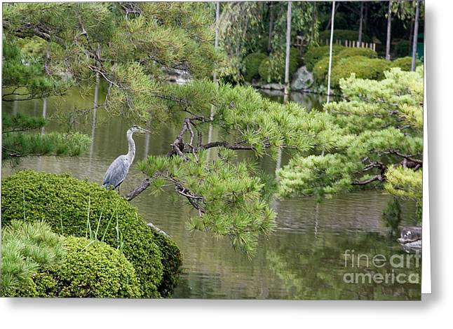 Kyoto Greeting Cards - Great Blue Heron in Pond Kyoto Japan Greeting Card by Thomas Marchessault