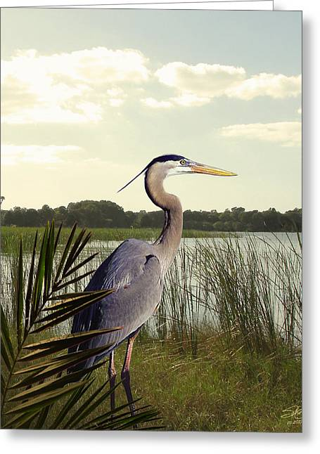 Great Birds Digital Greeting Cards - Great Blue Heron in the Bulrushes Greeting Card by Schwartz
