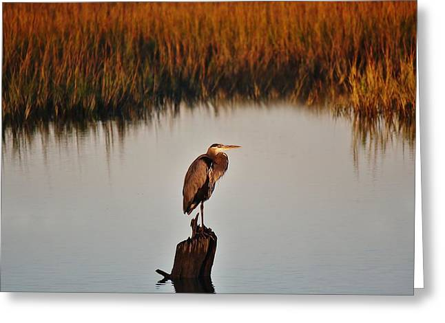 Great Blue Heron In The Marsh - # 20 Greeting Card by Paulette Thomas