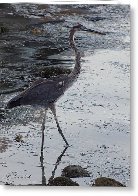 Water Bird Greeting Cards - Great Blue Heron in the Shallows Greeting Card by Patricia Twardzik