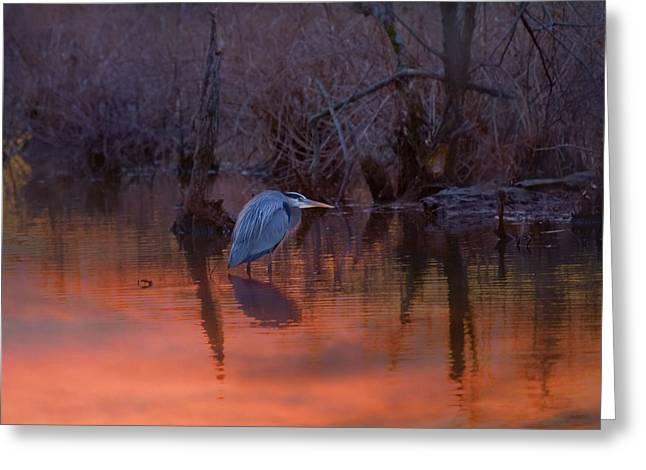 Great Blue Heron Digital Art Greeting Cards - Great Blue Heron Greeting Card by J Larry Walker