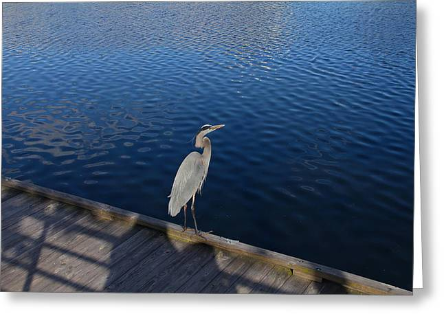 Wildlife Celebration Greeting Cards - Great Blue Heron On A Dock Greeting Card by Denise Mazzocco