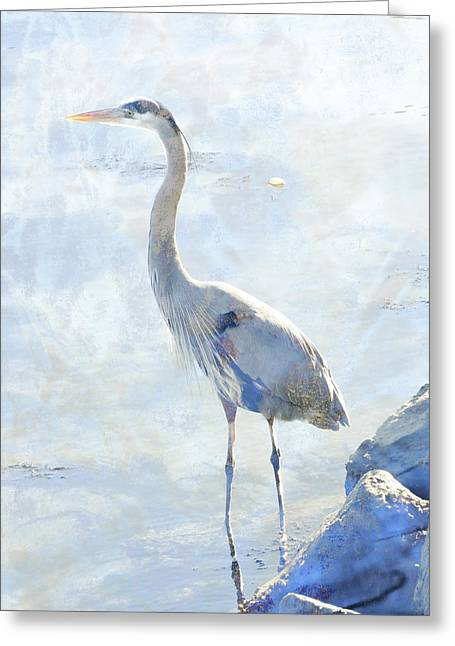 Great Blue Heron Greeting Card by Robert Ball
