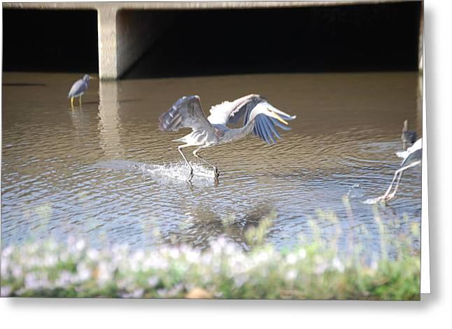 My Ocean Greeting Cards - Great blue heron Greeting Card by Robert Floyd